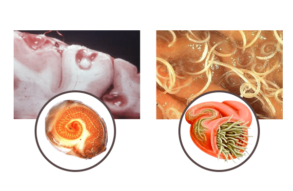 Parazitol - como tomar - funciona - ingredientes